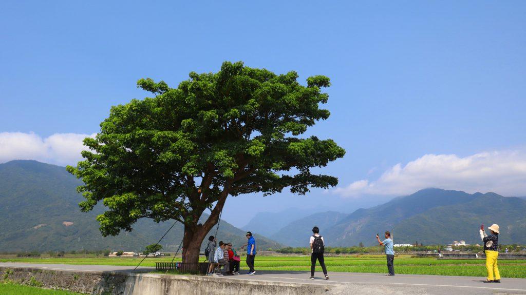 Takeshi Kaneshiro tree